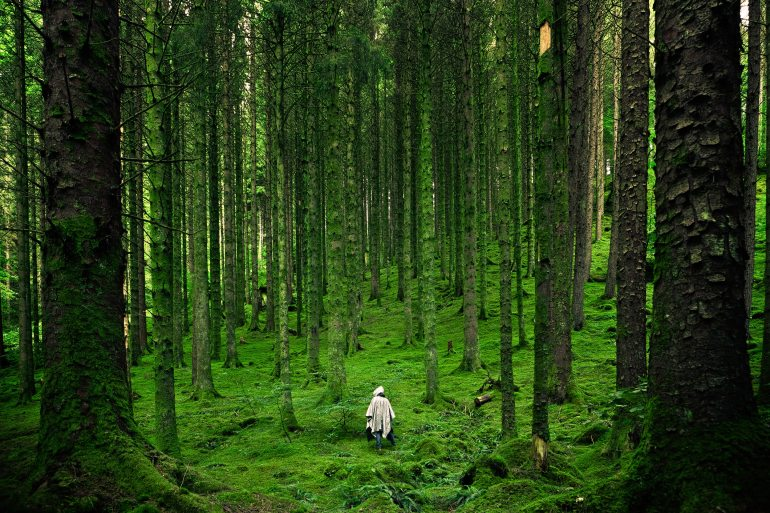 alone-forest-green-15286